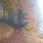 Hornweg